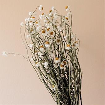 Dried Daisy Flowers
