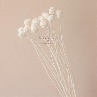 Dried White Billy Buttons Flowers