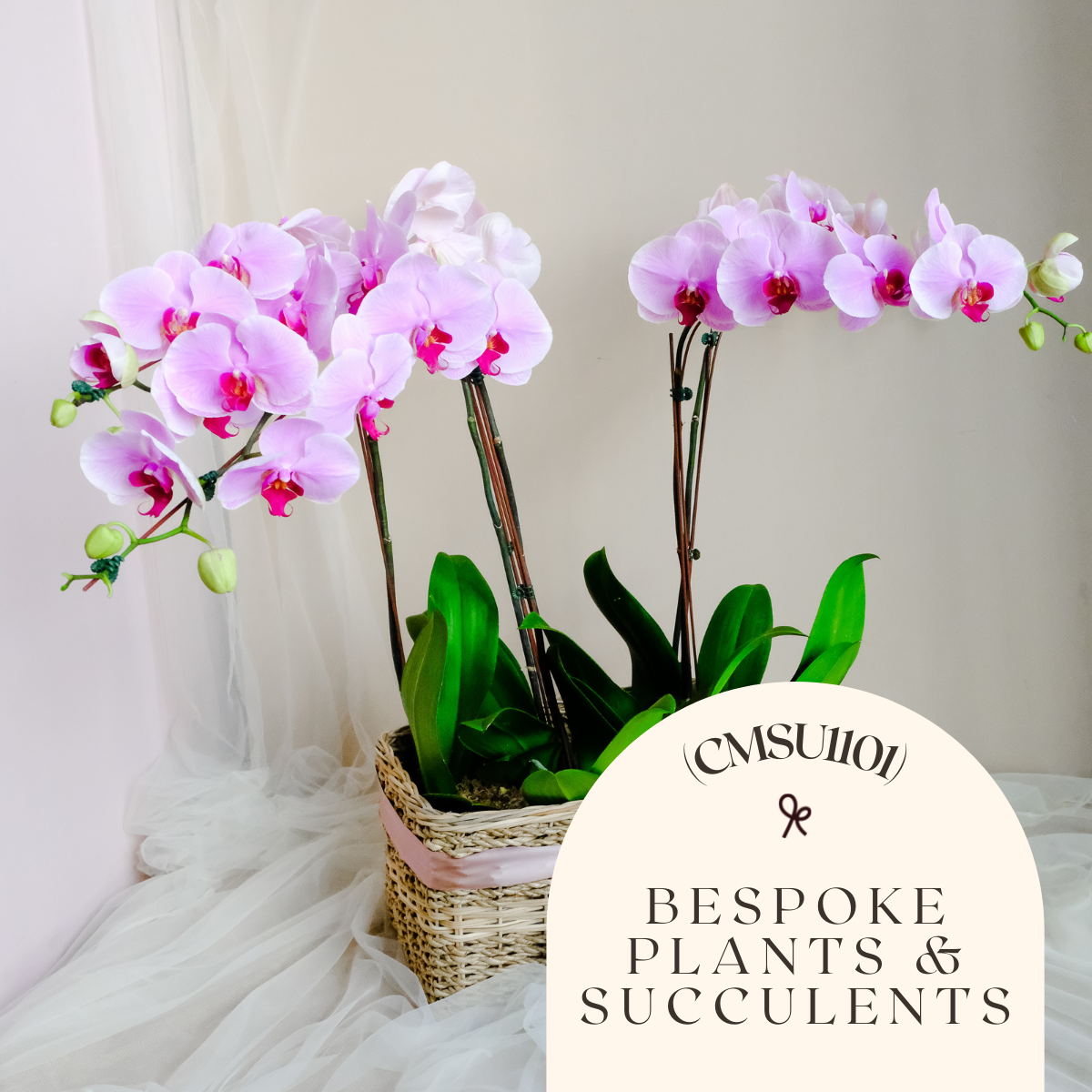 Bespoke Plants & Succulents