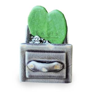 I. Hoya heart Cactus