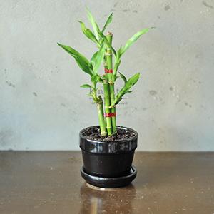 I. Fortune Plant