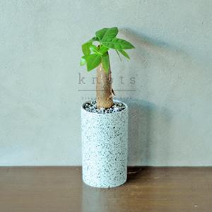 I. Money Tree Plant