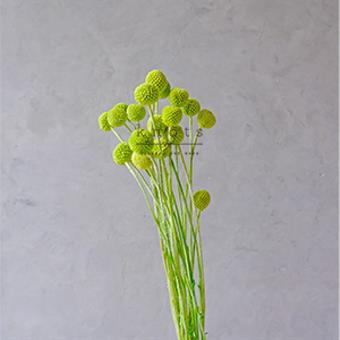 Dried Green Billy Buttons Flowers
