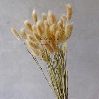 Dried Bunny Tails Flowers