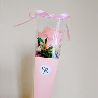 One Love (Pink Ecuadorian Rose)